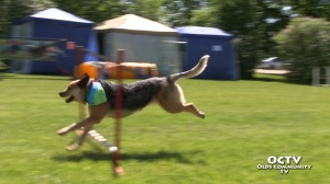 octv_olds-canada-day_12