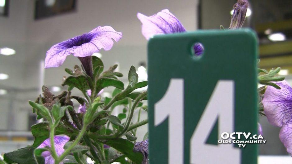purple flower communities iin bloom